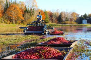 Cranberry Bogs & Marshes